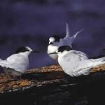 Gossiping Birds
